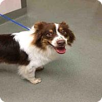 Adopt A Pet :: A1744159 - Carlsbad, CA