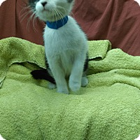 Adopt A Pet :: Wanda - University Park, IL