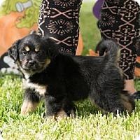 Adopt A Pet :: Aurora - Santa Fe, TX