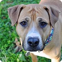 Adopt A Pet :: Aurora - College Station, TX