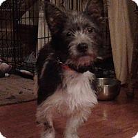 Adopt A Pet :: Delta - Cincinnati, OH