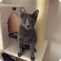 Adopt A Pet :: Charles Xavier - Courtesy Post - McKinney, TX