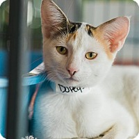 Adopt A Pet :: Dopey - New Orleans, LA
