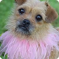 Adopt A Pet :: Josephine - Denver, CO