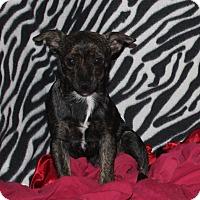 Adopt A Pet :: Sara - Ridgecrest, CA