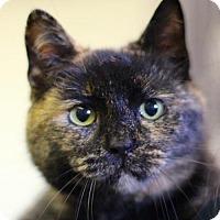 Adopt A Pet :: Pocohontas - Bedford, VA