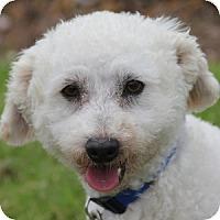 Adopt A Pet :: Benji - La Costa, CA