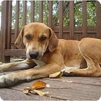 Adopt A Pet :: Annabella - Plano, TX