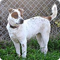 Adopt A Pet :: Bart - Natchitoches, LA