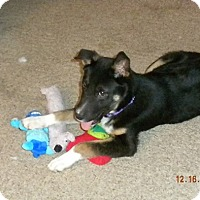 Adopt A Pet :: Boom Boom - ON HOLD - Youngstown, OH