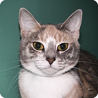Adopt A Pet :: Margareet - Rockaway, NJ