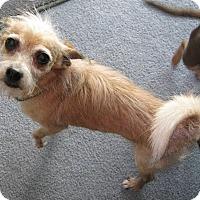 Adopt A Pet :: Trooper - San Diego, CA