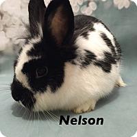 Adopt A Pet :: Nelson - Auburn, CA
