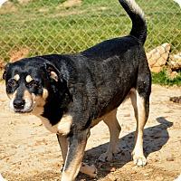 Adopt A Pet :: Leigha - Groton, MA