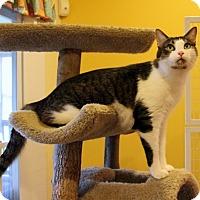 Adopt A Pet :: Mo - Gaithersburg, MD