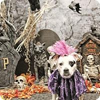 Adopt A Pet :: JoJo - West Allis, WI