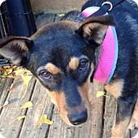 Adopt A Pet :: Krissy - Olive Branch, MS