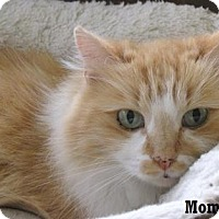 Adopt A Pet :: Mommie Girl - Fullerton, CA