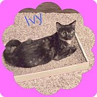 Adopt A Pet :: Ivy - Arlington/Ft Worth, TX