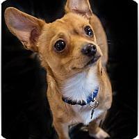 Adopt A Pet :: Luke - Santa Clara, CA