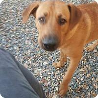 Adopt A Pet :: Sammy - Custer, WA