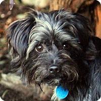 Adopt A Pet :: Toto - Antioch, CA