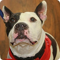 Adopt A Pet :: Rocco - Baltimore, MD
