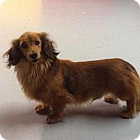 Adopt A Pet :: Hanz - Westpark, OH