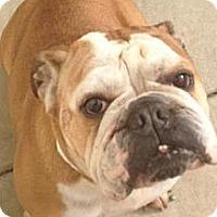 Adopt A Pet :: Belle - Lancaster, OH
