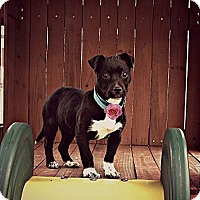 Adopt A Pet :: Rosie - Nashville, TN