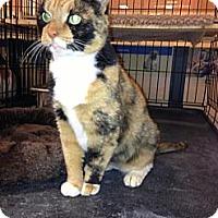 Adopt A Pet :: Sedona - Monroe, GA