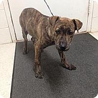 Adopt A Pet :: Willie - Lancaster, VA