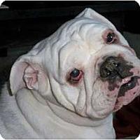Adopt A Pet :: Lucy - Winder, GA