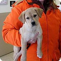 Adopt A Pet :: Riff - Ludington, MI
