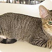 Adopt A Pet :: Peregrine - Dallas, TX
