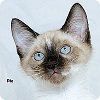 Adopt A Pet :: Rio M - Sacramento, CA