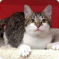 Adopt A Pet :: Kilo - Merrifield, VA
