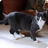 Adopt A Pet :: Purrito - Philadelphia, PA