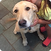 Adopt A Pet :: *Daisy - PENDING - Westport, CT