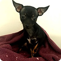 Adopt A Pet :: Buddy - Lawrenceville, GA