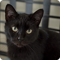 Adopt A Pet :: Nikki - Wilmington, OH