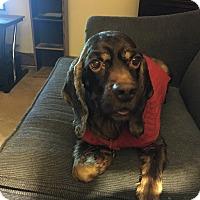 Adopt A Pet :: Prince 6yr - Mentor, OH
