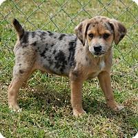 Adopt A Pet :: Freckles - Manning, SC