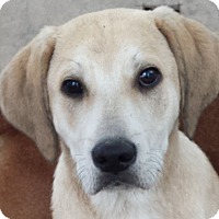 Adopt A Pet :: Scout AD 07-02-16 - Preston, CT