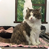 Adopt A Pet :: Deirdre - Agoura Hills, CA