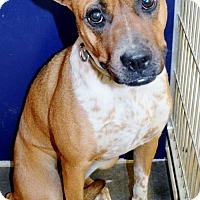 Adopt A Pet :: Sugar - San Jacinto, CA