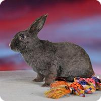 Adopt A Pet :: Gaia - Marietta, GA