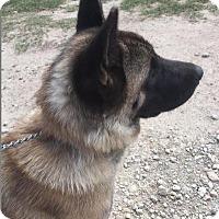 Adopt A Pet :: Xena - Quinlan, TX