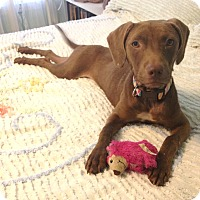 Adopt A Pet :: Jen - Groton, MA
