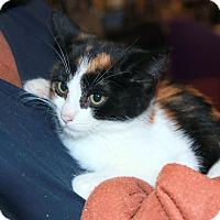 Adopt A Pet :: Shasta - Rochester, MN